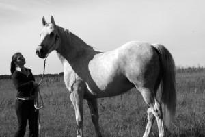 cheval de la ferme de mesenguy